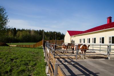 «Россети Ленэнерго» обеспечили мощность фермерскому хозяйству во Всеволожском районе Ленинградской области